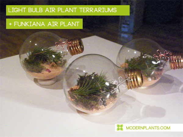 light-bulb-air-plant-terrarium.jpg